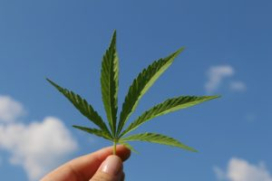 cannabis growshopverbod=advocaat